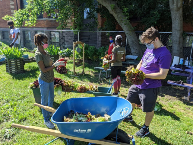 Urban Ecologists volunteering at the Children's Garden. Throughout the day, crops were harvested, weeds were pulled, and the fresh fruits and veggies were tasted..