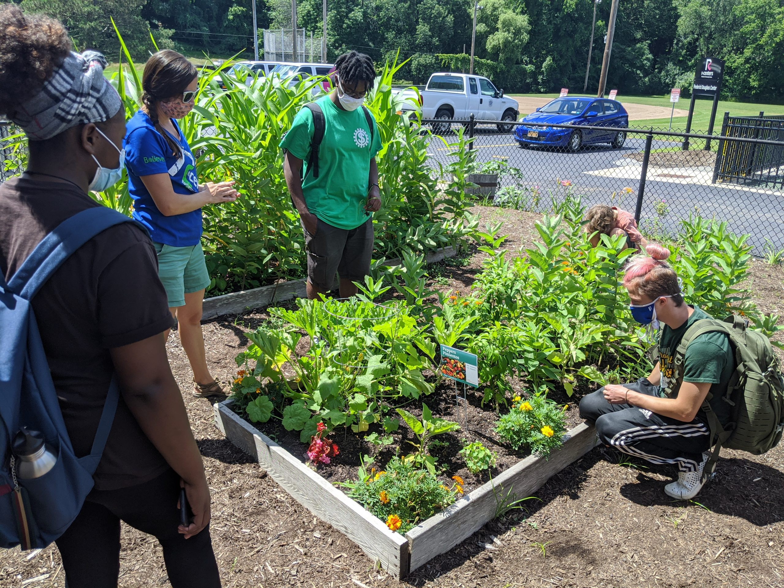 Urban Ecologists visit many community gardens, learning about the importance of companion planting and other gardening practices.